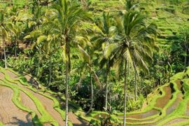 Ubud_Driver_Private_Tour1